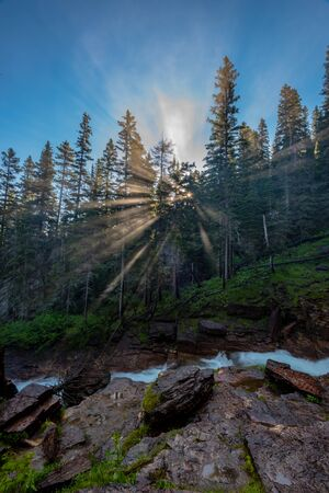 Sun Rays Burst Through Misty Forest in Montana wilderness