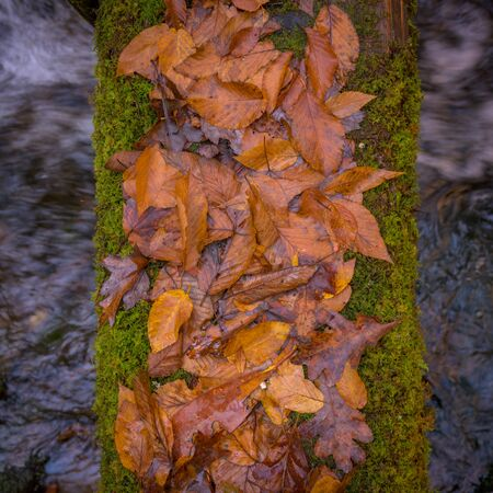 Wet Fall Leaves on Log Bridge over mountain river