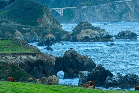 The Many Layers of Big Sur coastline with rocks, water, bridges, and cows
