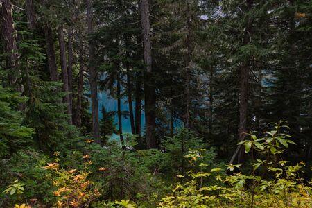 Blue Waters Peek Through Forest in Washington Wilderness