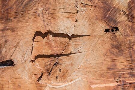 Cross Section of Redwood Trunk Background Image 版權商用圖片