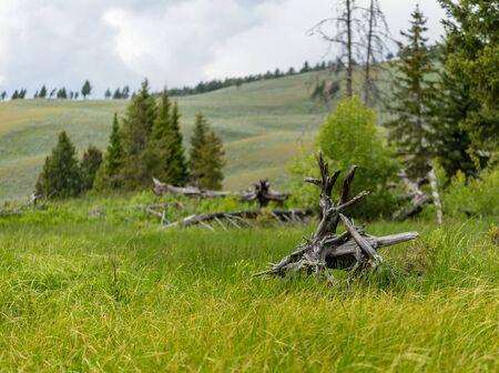 Dead Wood Resting in Grassy Field in Wyoming