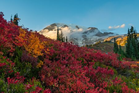 Clouds Hover in Front of Mount Rainier with Red Huckleberry in Foreground