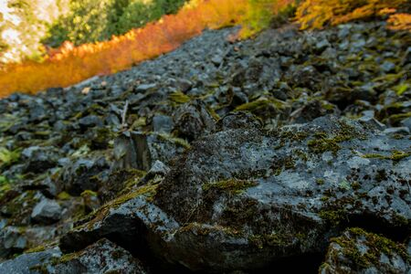 Green Moss on Rock with Orange Bush in Background 版權商用圖片