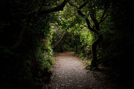 Trail Through Gnarly Overgrown Forest with light ahead