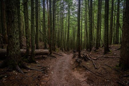 Woman Hikes Through Forest in Glacier during summer