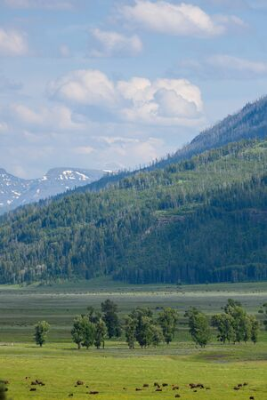Clouds hover over bison in Lamar Valley in summer