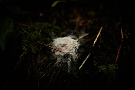 Fuzzy Fungus Grows On Forest Floor in Smokies
