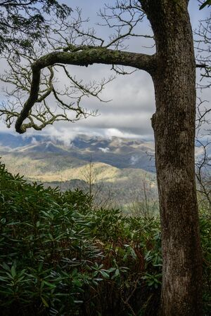Gnarly Tree Frames Smoky Mountain View in early spring