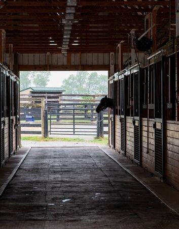 Horse Sticks His Head out of the Barn Door to empty row