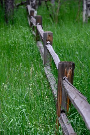 Split Rail Fence Through Tall Grass in Colorado mountains