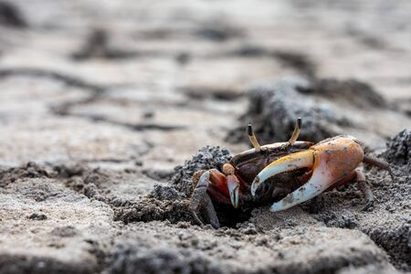 Wide Shot of Small Crab Scurrying on Dry Cracked Earth