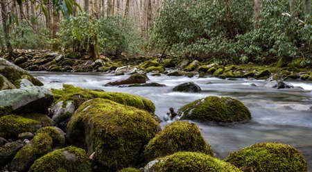 Little River Rushes Past Mossy Boulders in early spring