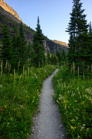 Trail Through Wildfowers blooming in Montana summer