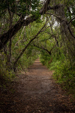Looking Down Snake Bight Trail  in Everglades