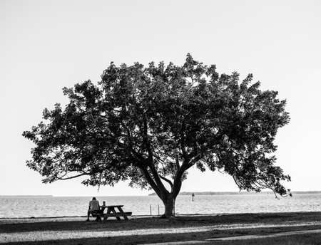Man Sits at Table Below Single Tree With Bright Sky in Black and white