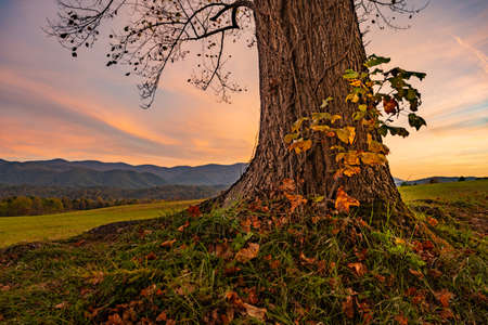 Base of Large Tree at Sunset in Cades Cove