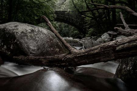 Dead Trees Jammed In Boulder Filled Creek in Great Smoky Mountains National Park Standard-Bild