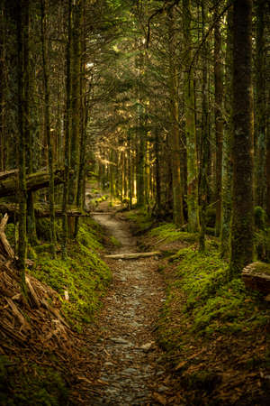 Warm Green Light Fills Dense Forest along the Sugarland trail in the Great Smoky Mountains National park Standard-Bild
