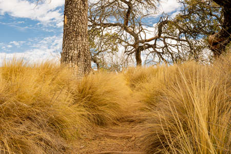 Long Grasses Hide Trail Uphill through Boot Canyon in Big Bend National park