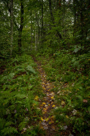 Narrow Trail Cuts Through Thick Forest in Great Smoky Mountains National Park Standard-Bild