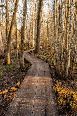 Narrow Board Walk Zigzags Through Swamp in Louisiana park