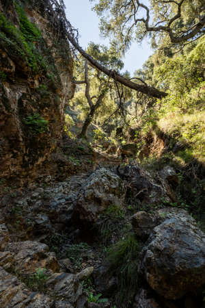 Overgrown Canyon On Santa Cruz Island in Channel Islands National Park