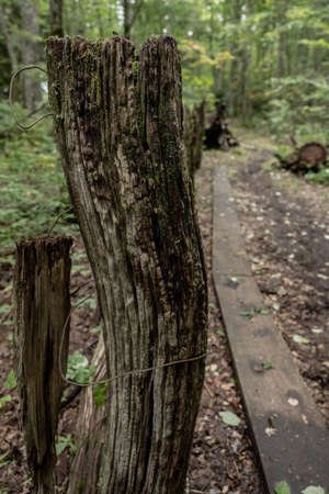 Old Fence Along Cataloochee Divide in Great Smoky Mountains National Park