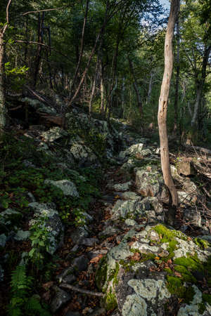 Rocky Trail Through Boulder Field and Forest in Shenandoah National Park