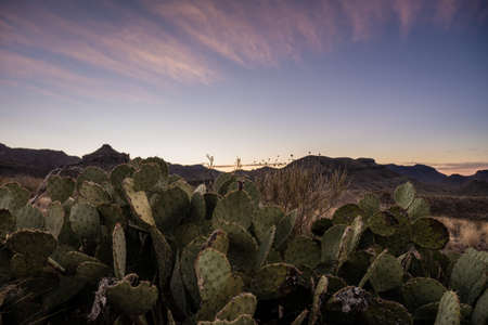 Pricklypear and Sunrise in Big Bend National Park