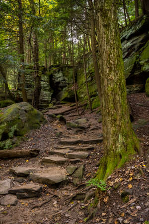 Stone Steps and Mossy Tree Trunk At The Ledges in Cuyahoga Valley National Park