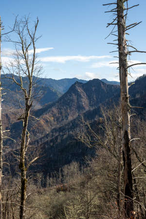Remains of Forest Fire Scarred Chimney Tops in great Smoky Mountains National Park