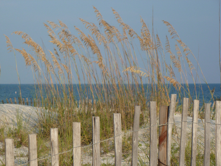 Sea oats with fence at the gulf of mexico