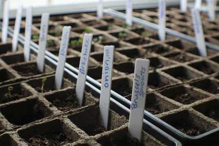 Indoor GardenVegetables in Biodegradable Planters, Some Plants Starting to Sprout Stock Photo