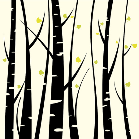 Birch three for you design