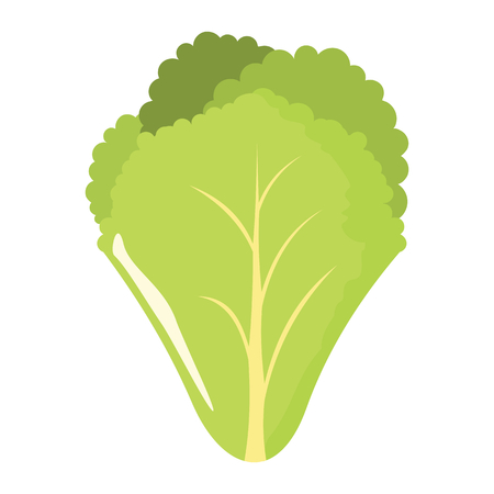 kale: Salad leaf icon in cartoon flat style isolated object vegetable organic eco bio product from the farm vector illustration. Salad object for vegetarian design Illustration