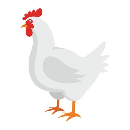 White chicken flat cartoon icon. hen vector illustration for design and web isolated on white background. White chicken vector object for labels, logos and advertising