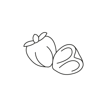 Persimmon icon. Outline persimmon vector icon for web design isolated on white background