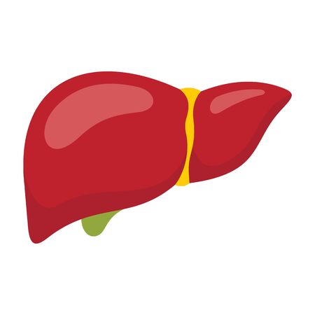 Body part liver flat icon. Vector Body part liver in flat style isolated on white background. Element for web, game and advertising 向量圖像