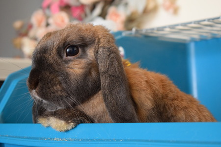 rabbit standing: Bunny face portrait Stock Photo