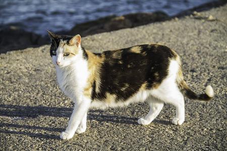 A pregnant cat close to the sea in a sunny day Фото со стока