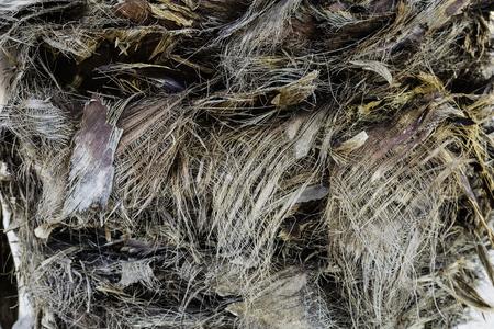 vegetal: background texture vegetal fiber on trunk of palm