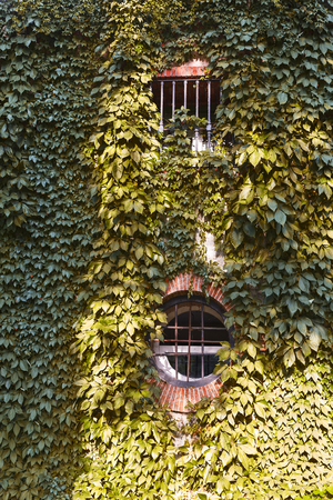 round and square windown with bricks frame on facade coverd with leaves