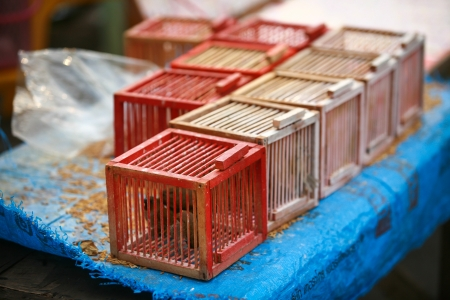 prison house: Cage the bird for release in the merit of Thailand  Stock Photo