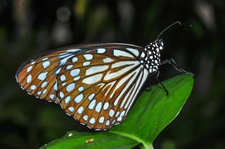 dusky: Butterfly is indicative of the abundance of forest that point