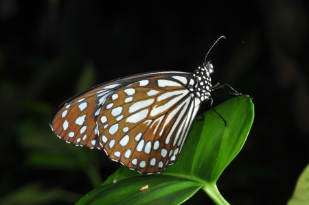indicative: Butterfly is indicative of the abundance of forest that point