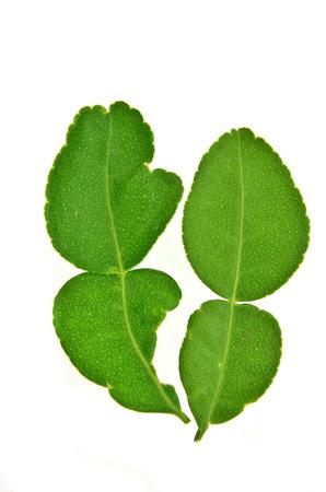 kaffir: kaffir leaves Stock Photo