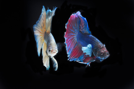 FIGHT FISH photo