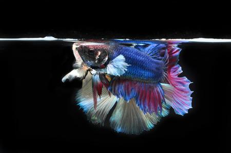fight fish Stock Photo - 28015757