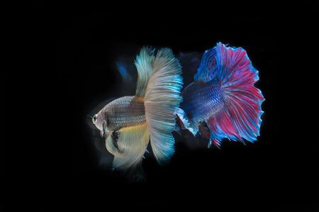 fight fish photo